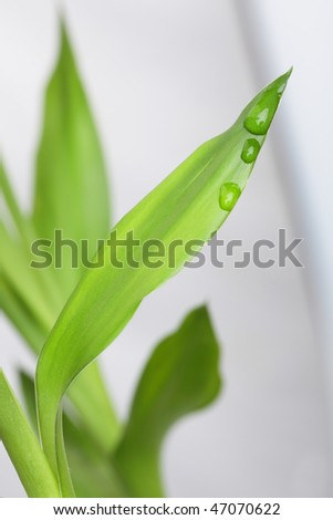Green leaf with a dew drop - stock photo