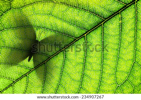 Green leaf with butterfly silhouette on it close-up background. Macro - stock photo