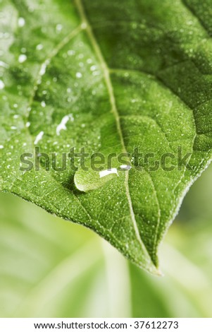 green leaf with dew drop - stock photo