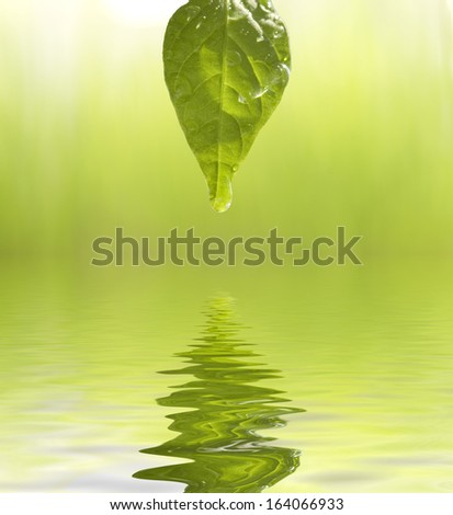 green leaf with dew drops  - stock photo
