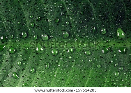 Green leaf with dewdrops - stock photo