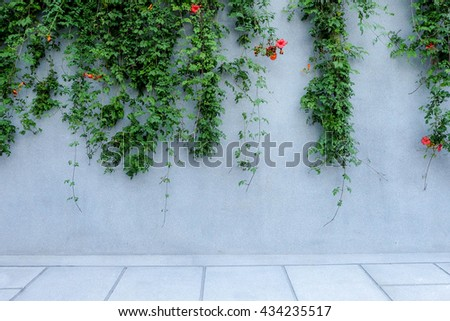 Green leaf with grey concrete wall - stock photo