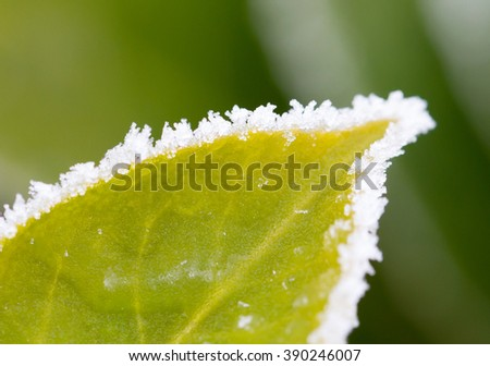 Green leaf with ice, selective focus on some crystals - stock photo