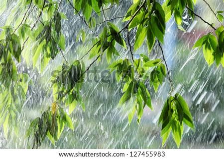 Green leaf with raining - stock photo