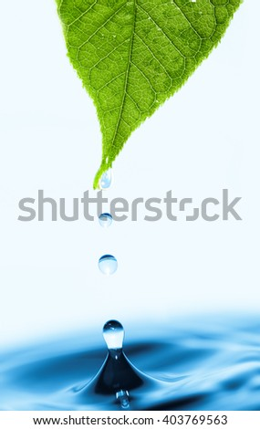 Green leaf with splashing water drops. - stock photo