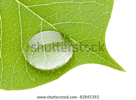 Green leaf with transparent water drop isolated on white background, nature concept - stock photo