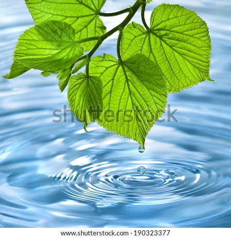green leaf with water drop and splash  - stock photo