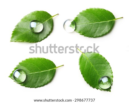 Green leaf with water drop isolated on white background. - stock photo