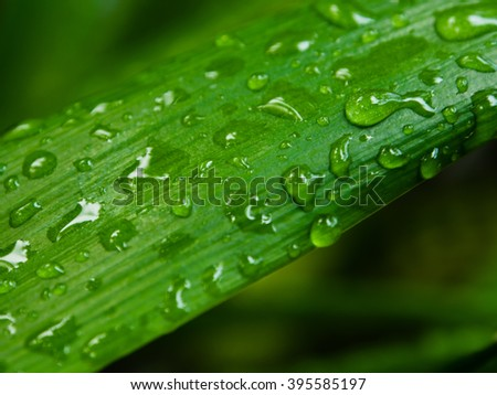 Green leaf with water droplets from forming on the leaves. - stock photo