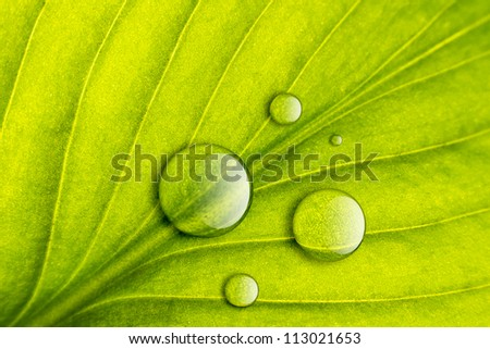 Green leaf with water drops close-up background. Macro - stock photo