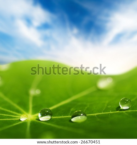 Green leaf with water drops on it (shallow DoF) - stock photo