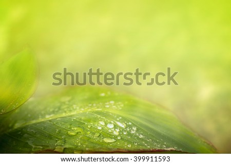 Green leaf with water drops over summer nature background - stock photo