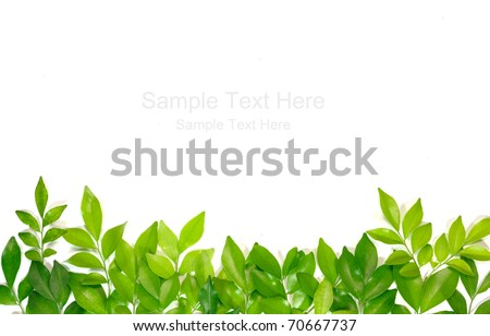 Green leafs on white background - stock photo