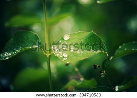 Green leafs with dew. - stock photo
