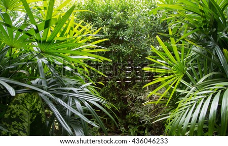 Green Leafy Garden. - stock photo