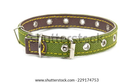 green leather dog collar - stock photo
