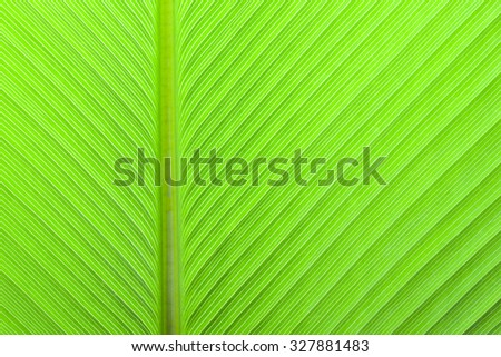 Green leav texture for background - stock photo