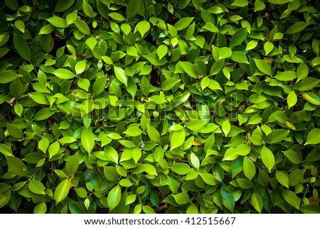Green leave texture background - stock photo