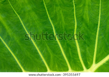Green leave texture for background - stock photo
