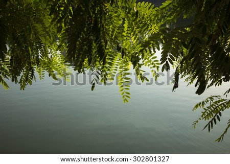 Green leaves against water surface - stock photo