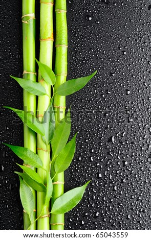 green leaves and bamboo grove on the black background - stock photo