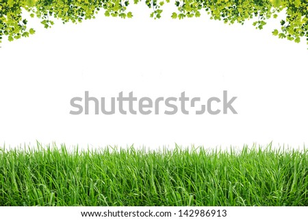 Green leaves and green grass isolated on white background - stock photo