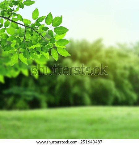 Green leaves and natural background - stock photo