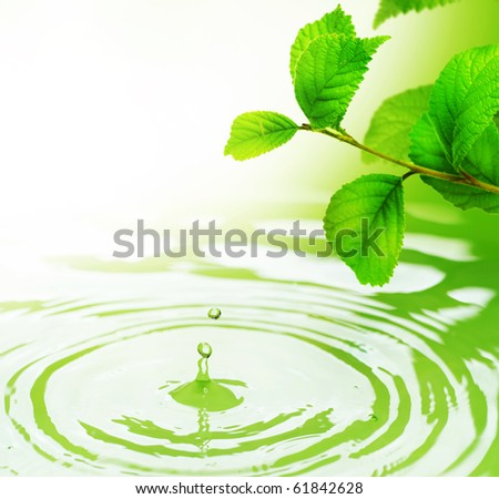 Green Leaves and Water - stock photo