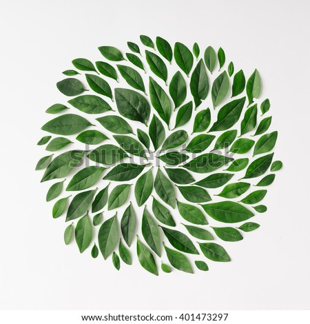 Green leaves arranged in spiral shape on white background. Flat lay. - stock photo