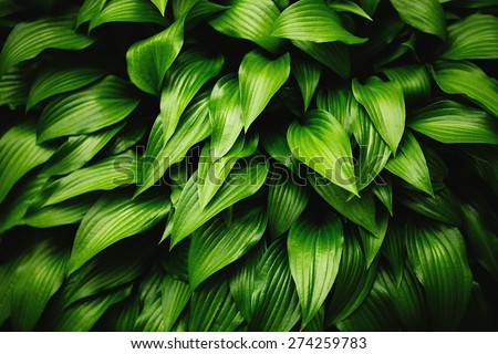 Green leaves background. Grass and dew abstract background. - stock photo