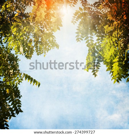green leaves blur - stock photo
