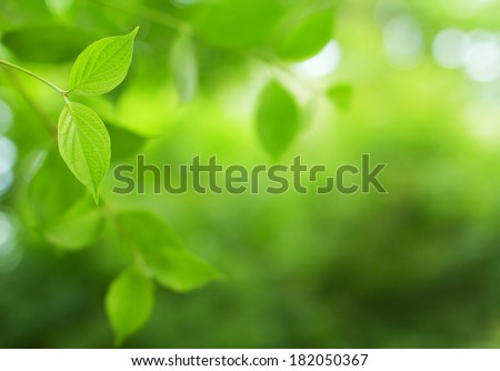 Green leaves close-up. Selective focus (shallow depth of field).  - stock photo
