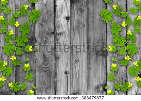 Green leaves frame on old wood background - stock photo