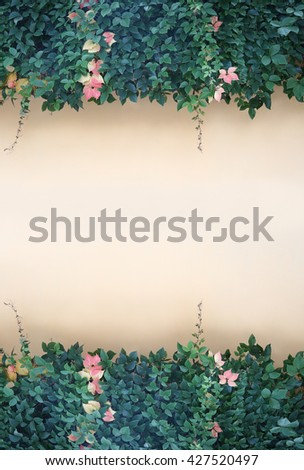 Green leaves frame on wall for background     - stock photo