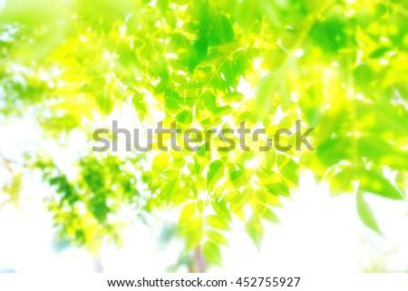 Green leaves illuminated with bright sunlight - stock photo
