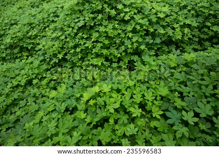 green leaves in a park - stock photo
