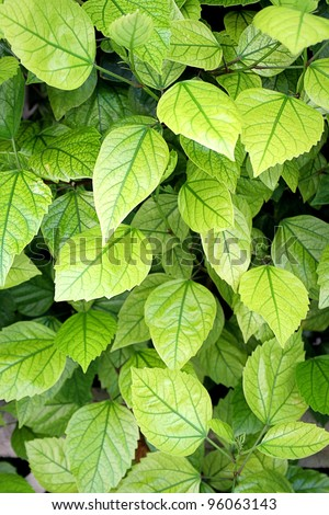 Green leaves in summer sunny day - stock photo