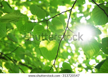Green leaves in the forest with sun flare - stock photo