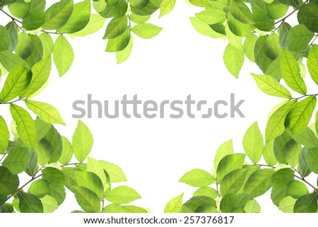 green leaves , isolate on white - stock photo