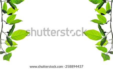 green leaves isolate on white background - stock photo