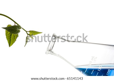 Green leaves next to an erlenmeyer flask with a blue liquid in it. - stock photo