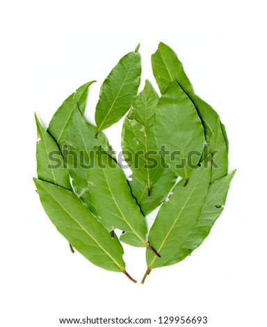 green leaves of a tree on a white background - stock photo