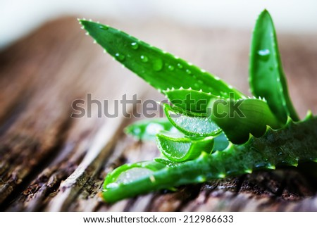 Green leaves of aloe plant close up on wooden background - stock photo