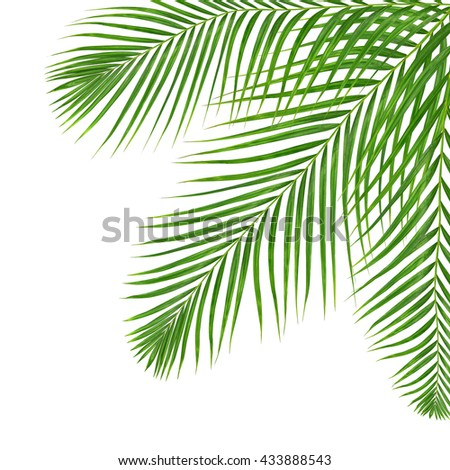 Green leaves of palm tree isolated on white background - stock photo