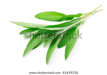 green leaves of sage, isolated on white background - stock photo