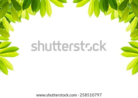 Green leaves on a white background, isolated - stock photo
