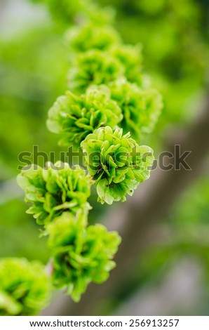 Green leaves on branch over green background - stock photo