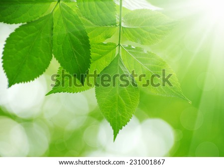 green leaves on the green backgrounds - stock photo