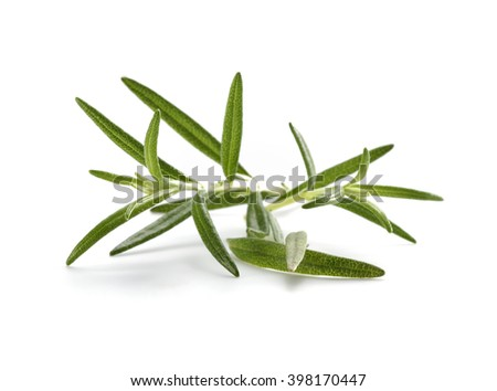 green leaves on white space  - stock photo
