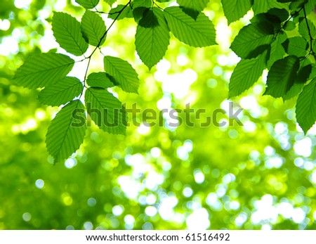Green leaves over abstract background - stock photo